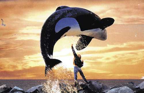 free-willy-500x322